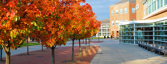 Campus in fall