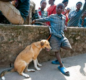 "Redfern Arts Center presents ""Dogs of Rwanda"""