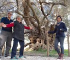 (l–r): Richard Blatchly, Patricia O'Hara, and Zeynep Nircan beside a 3,000-year-old olive tree in Crete that still produces olives.