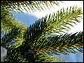 Arboretum Feature