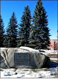 Oya Hill Colorado Spruce photo