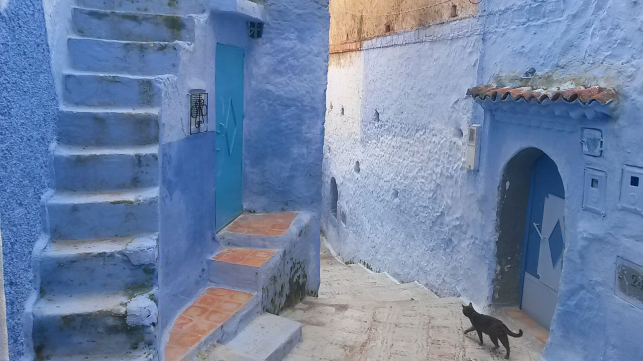 The Blue City (Chefchaouen, Morocco) - The entire city was this amazing blue color. The city consisted of narrow alleyways, stairways, cats, and everything blue. Seeing the world through a blue lens, was an amazing way to live, even just for a day. (Courtney Parsons, Spanish Studies Abroad - Seville, Spain)