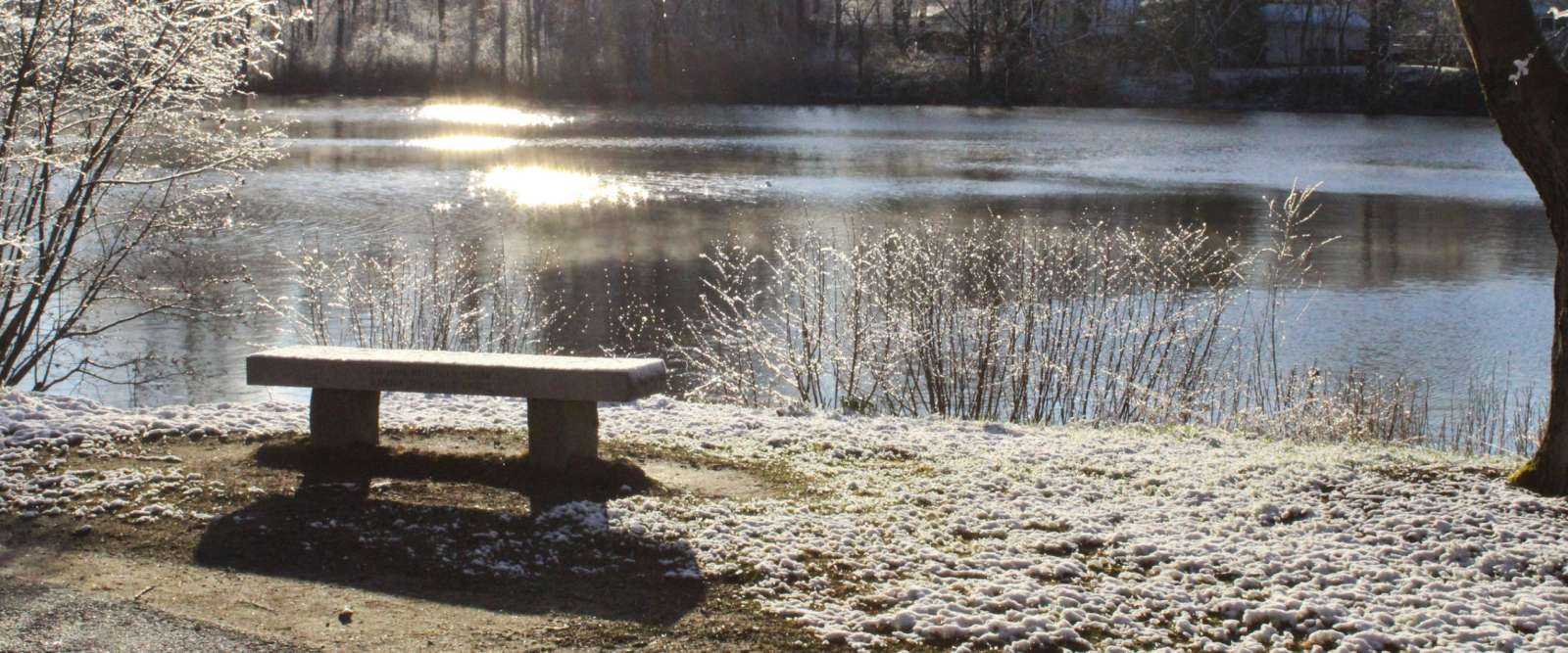 Bench overlooking pond