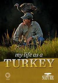 My Life as a Turkey